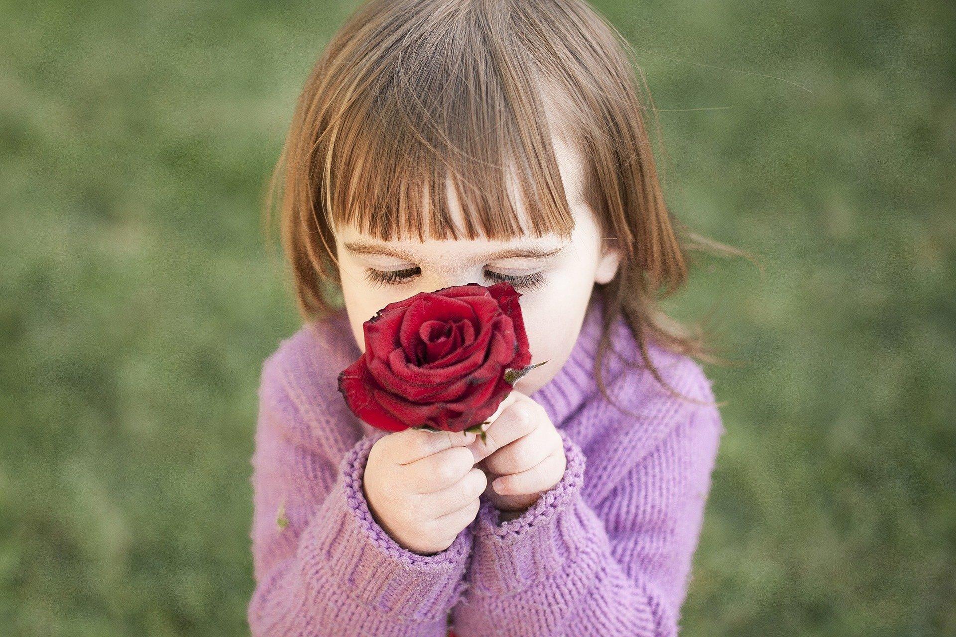 Aromapflege, Kind schnuppert an Rosenblüte, Rose,
